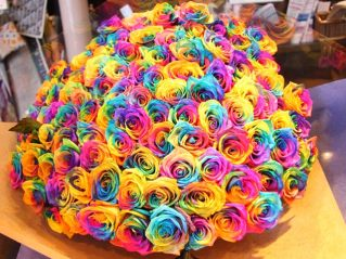rs-rainbowrose2